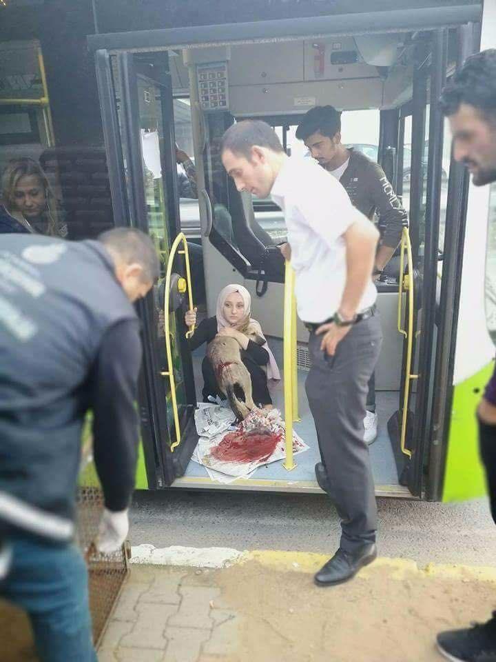 Halk otobüs şoförü çarptığı yaralı köpeği aracına aldı