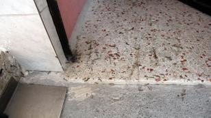 Tırtılların istila ettiği sokakta 4 gündür korku ile yaşıyorlar