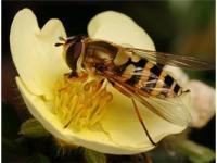 Arılar korku salıyor