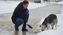Dilovası Belediyesi Sokak Hayvanlarına Sahip Çıktı