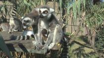 Hayvanat Bahçesi yeni misafirlerine kucak açtı