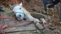 'Kanalizasyona düşen at öyle kurtarılmaz' diyerek itfaiye erine saldırdı
