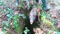 Kuyuya düşen yavru domuz için itfaiye ekipleri seferber oldu