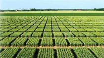 TOKİ Gebze'de arazi satacak